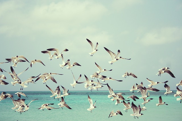 seagulls flying in flock above ocean